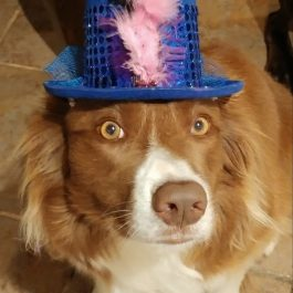 Kazz chapeau