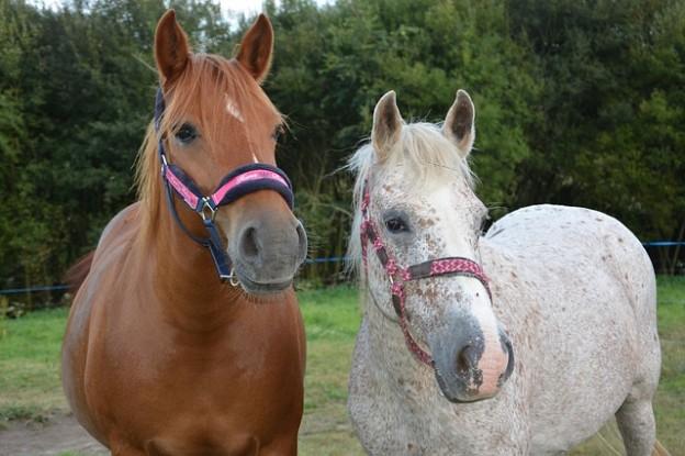 horses-3694084_640