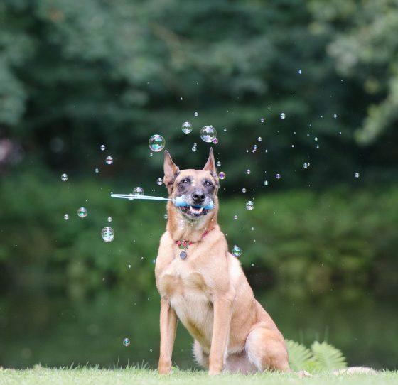 soap-bubbles-672639_1920